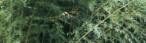 aggressive plants