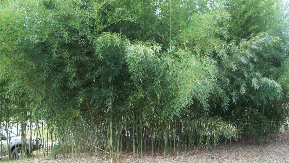 useful bamboo
