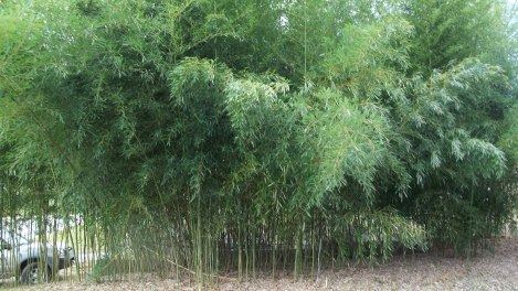 useful bamboo