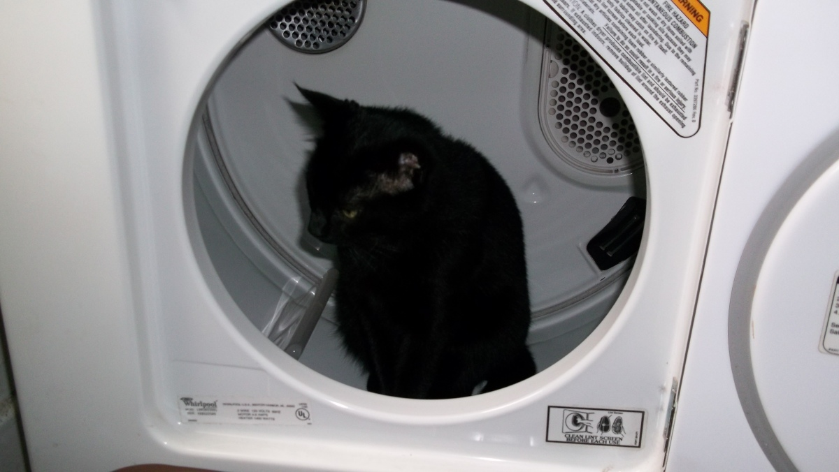 cat in clothes dryer