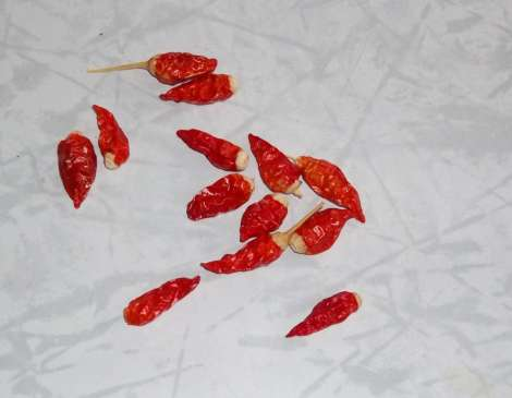 chilies for seeds
