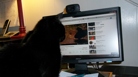cat watching video
