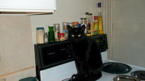 cat on stove