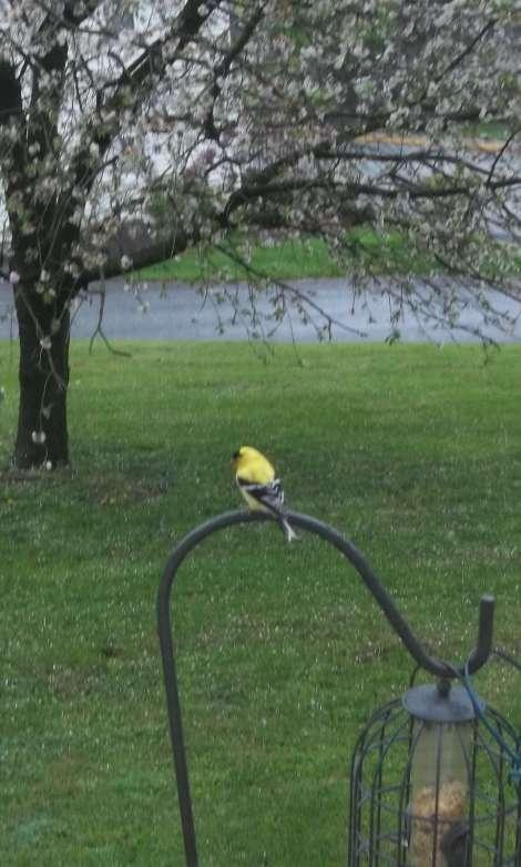 salad bird