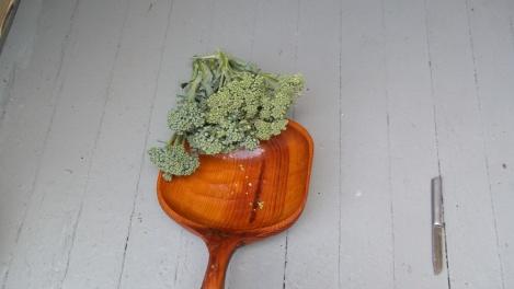 brccoli