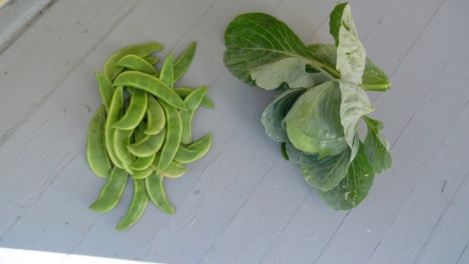 heirloom cabbage