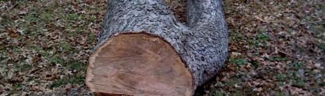tree cut downn