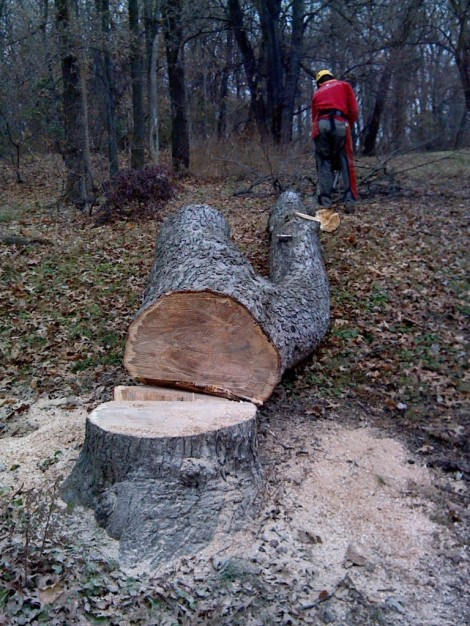tree cut downn