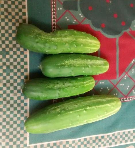 Straight 8 cucumbers