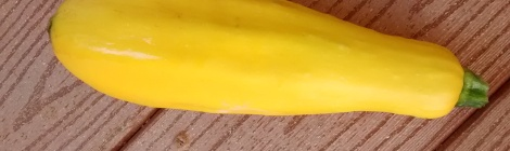 yellow straight neck squash